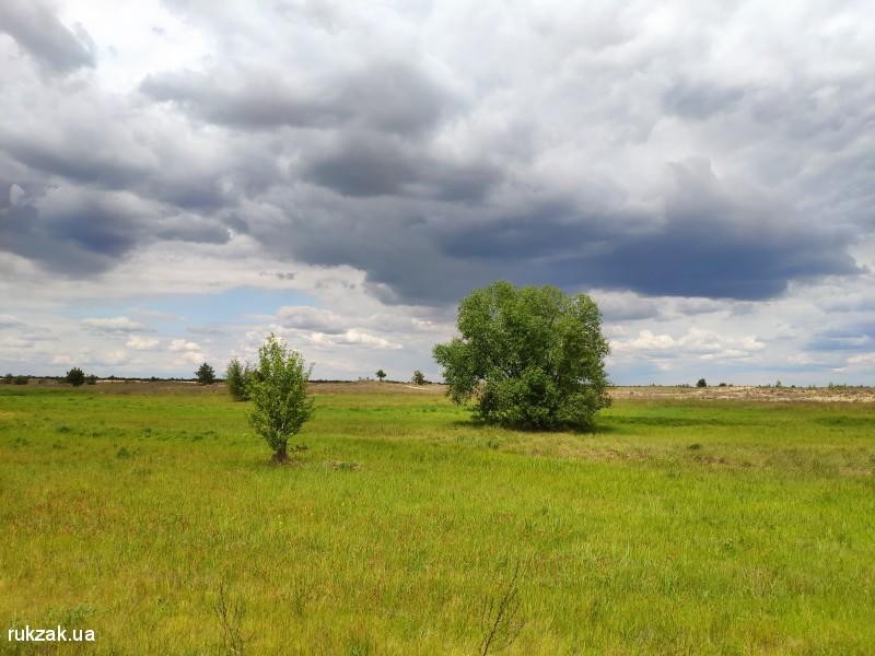 Одинокие деревья в Олешковских песка
