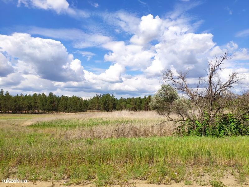 Пейзаж с камышовыми зарослями